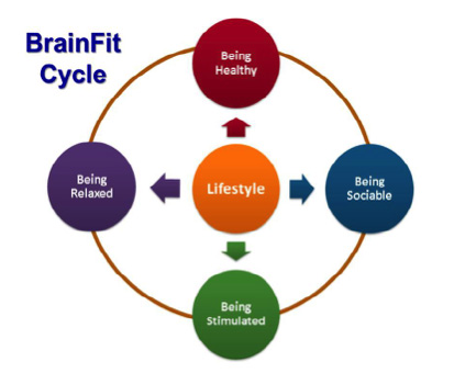 brainfit cycle